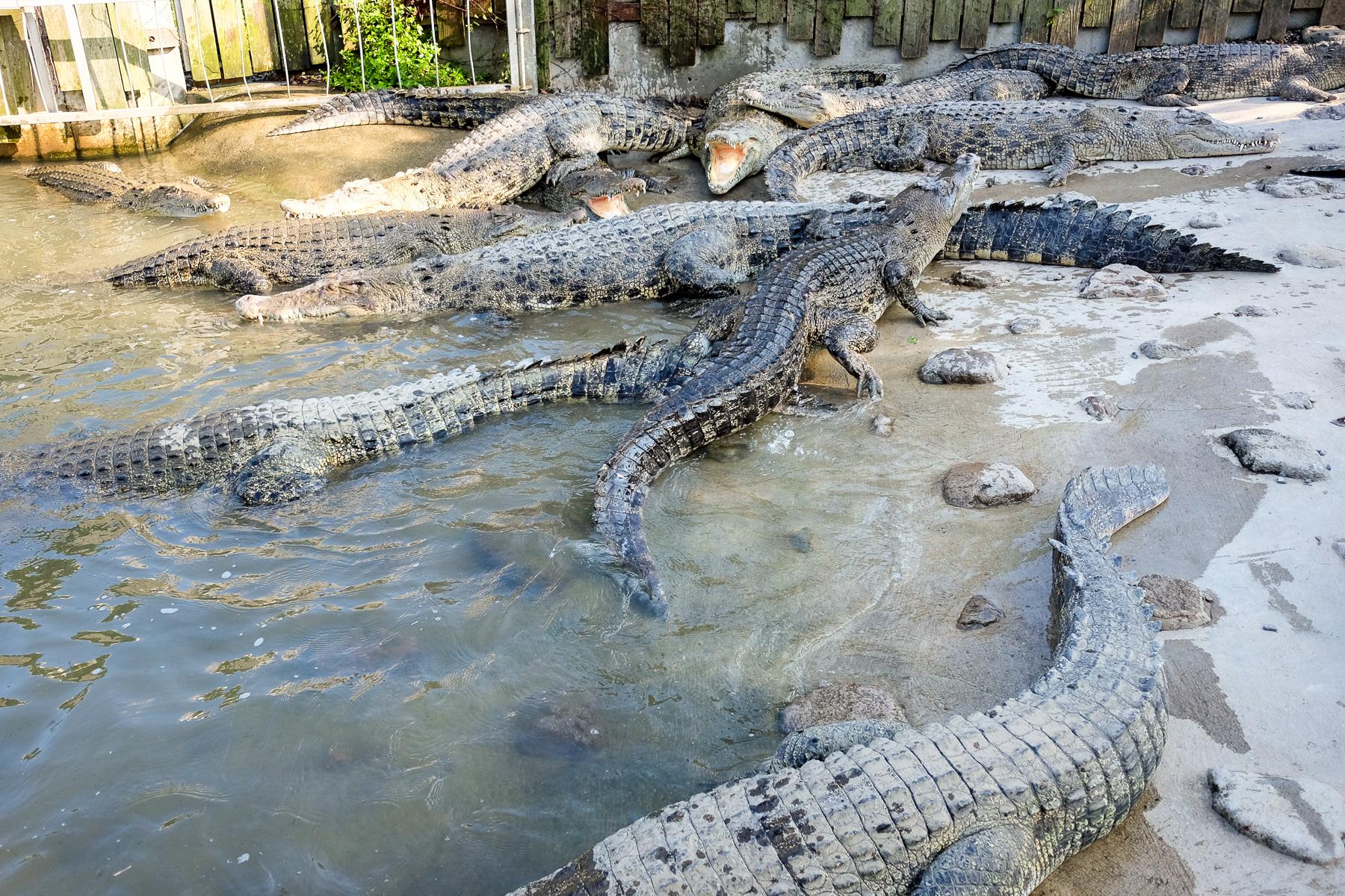 Krokodile gab's auch.